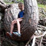 auf der Suche nach dem richtigen Treppenholz